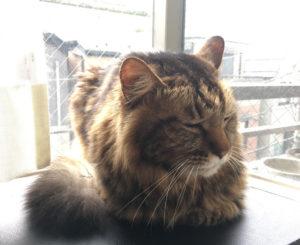 猫の竜馬です。